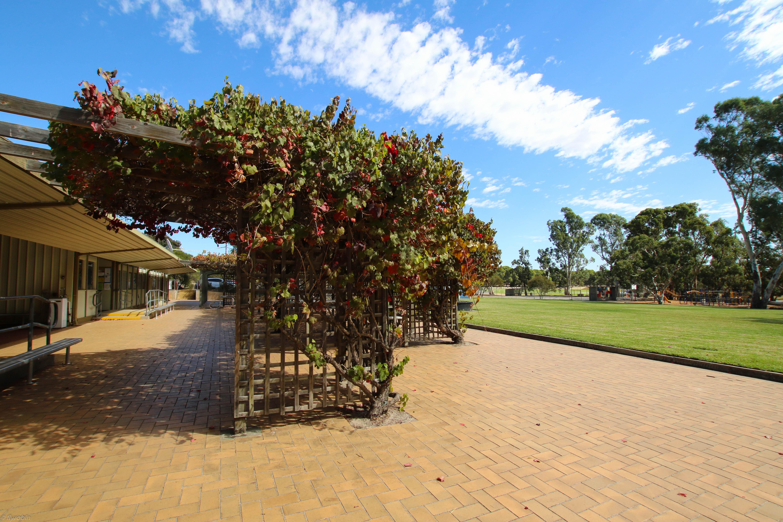 Front of School Vines